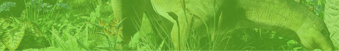 plan your visit Jurassic Gardens